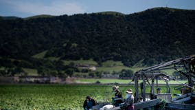 California farm workers strike after dozens test positive for coronavirus
