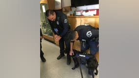 Therapy dogs visit LAPD officers