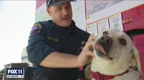 Stress relieving therapy dog helping firefighters cope