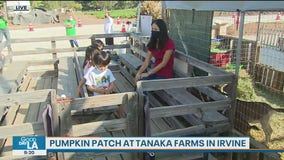 Looking for some fall fun? Check out the pumpkin patch at Tanaka Farms in Irvine