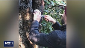 Woodland Hills man making medicinal mushrooms to help heal people