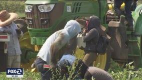 California farmworkers endure harsh conditions, wildfires and the coronavirus
