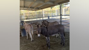 Equine influenza outbreak reported in Riverside County