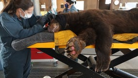 New network established to treat wildlife injured by wildfires