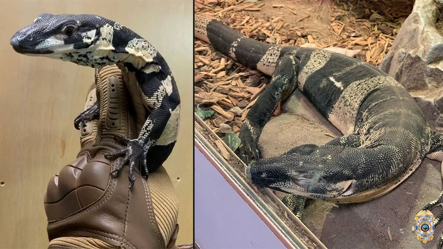 Long Beach police recover stolen lizards, valued at $75,000