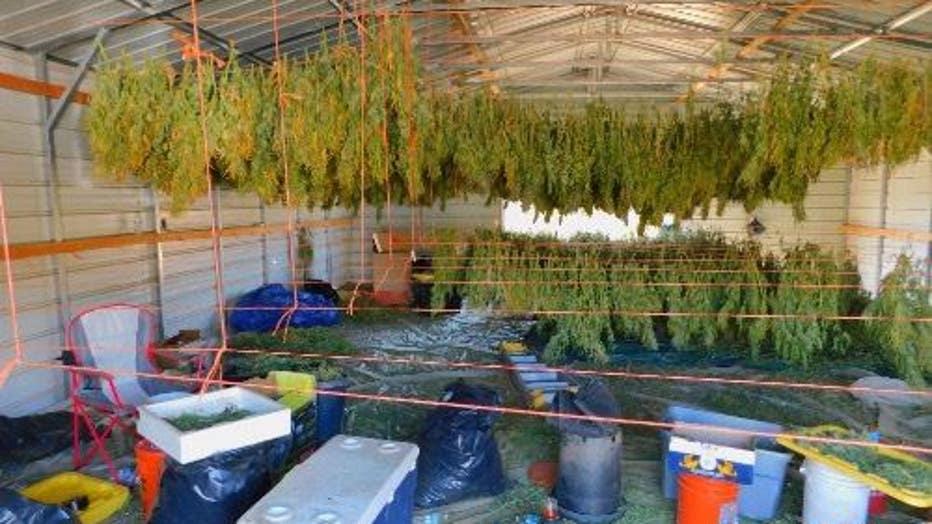 Riverside County raid nets $36 million worth of illegal pot