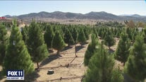 Christmas trees selling fast in Perris
