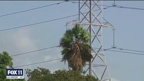 Power outages across the Southland due to strong winds has cut electricity to hundreds of customers