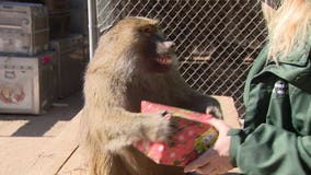 Animal sanctuary in Agua Dulce in desperate need for financial help