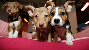 Puppy scams up 280% amid COVID-19 pandemic compared to 2019