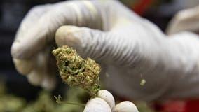 MORE Act: House votes to decriminalize marijuana at federal level