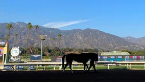 Colt euthanized after collapsing at Santa Anita Park