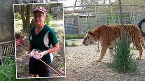 Carole Baskin: Tiger at Big Cat Rescue 'nearly tore off' arm of volunteer who didn't follow protocol