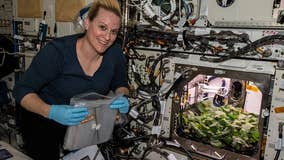 NASA grows radishes for first time onboard International Space Station