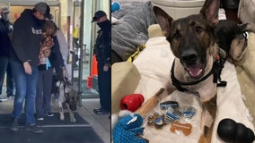 K-9 shot during police chase gets hero's salute as he leaves hospital