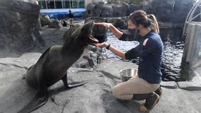 Aquarium of the Pacific reopens outdoor exhibits to the public