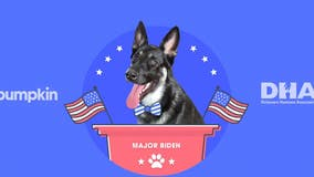 Joe Biden's dog Major, adopted from shelter, gets own 'indoguration' with performance by Josh Groban