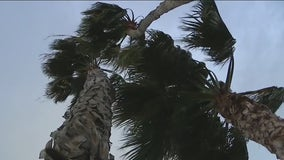 SoCal braces for damaging wind event; gusts expected to reach 75 mph