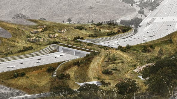 Campaign to build crossing bridge for wildlife to get across 101 Freeway safely raises $18 millions