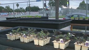 Veterans team up to create new lot for urban farmers in Long Beach