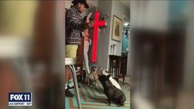 Lady Gaga's dog walker hospitalized after shooting, 2 dogs stolen