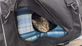 Bomb squad responds to suspicious package that turns out to be a bag of kittens