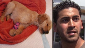 Sick puppy peddler ordered by Gascón to pay $200K in restitution to victims