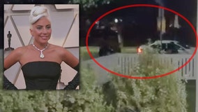 Lady Gaga dognapping may have been part of gang initiation, TMZ reports