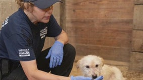 Struggling animal shelters receive help from national 'Feed the Hungry' campaign