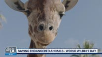 World Wildlife Day with the San Diego Zoo Wildlife Alliance