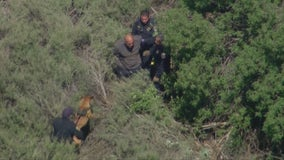 K9 officer apprehends pursuit suspect hiding in bushes in San Antonio Heights area