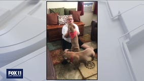 Groomer helps Paramount man reunite with his missing dogs
