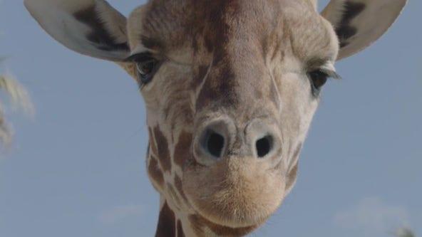 World Wildlife Day with the San Diego Zoo Wildlife Alliance