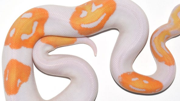 'Astronomically rare' snake with 3 'emoji' smiley faces sells for $6,000