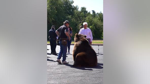 Republican John Cox brings live bear on recall campaign trail as Newsom picks up new endorsements