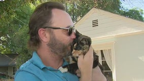 Cat allegedly stolen by Uber Eats driver located, reunited with its owner