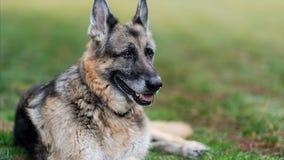 Champ, the Biden's older German Shepherd, dies at the White House