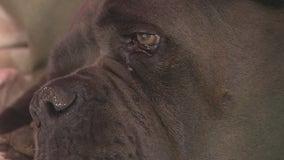Dog shot when deputies serve warrant to neighbor
