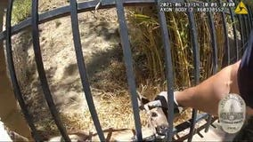 VIDEO: Glendale police officer rescues baby deer stuck in wrought iron fence