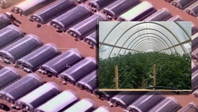 Authorities seize millions of dollars worth of marijuana from 500 illegal grows in Antelope Valley area