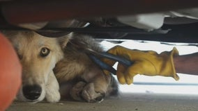 Dog rescued from underneath car