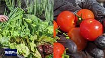 In Depth: Fighting food insecurity