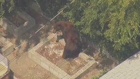 Bear spotted in residential neighborhood in Pasadena