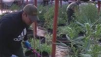 Exclusive look at San Bernardino County Sheriff's push to stop illegal marijuana grow houses
