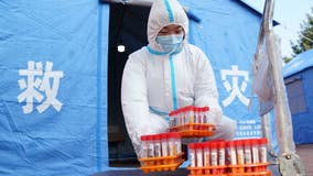 China kills 3 pet cats that tested positive for COVID-19