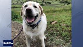 In Depth: Veterinarian shortage impacting SoCal pet owners