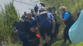 Dolphin rescued after getting 'pushed into' canal by Hurricane Ida