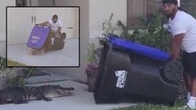 Florida man uses trash bin to catch alligator
