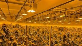 $10M cash, 500K marijuana plants seized in Bay Area's largest-ever bust