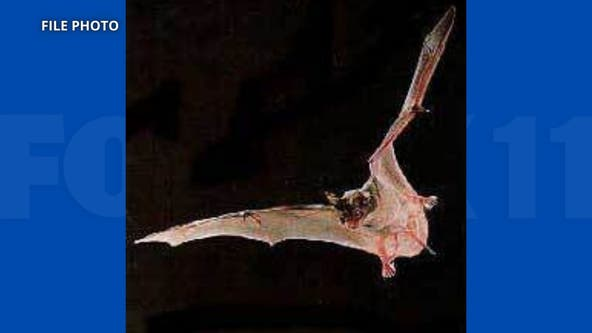 Bat in Orange County tests postitive for rabies